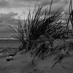 In de duinen zwart/wit