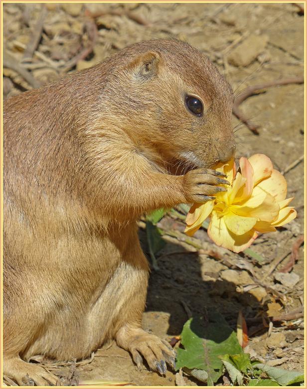 Bloemen dieet - dieren, die daar in aanmerking voor komen, krijgen bloemen en kruiden die in Artis zelf gekweekt zijn, te eten. De verzorgers gaan na