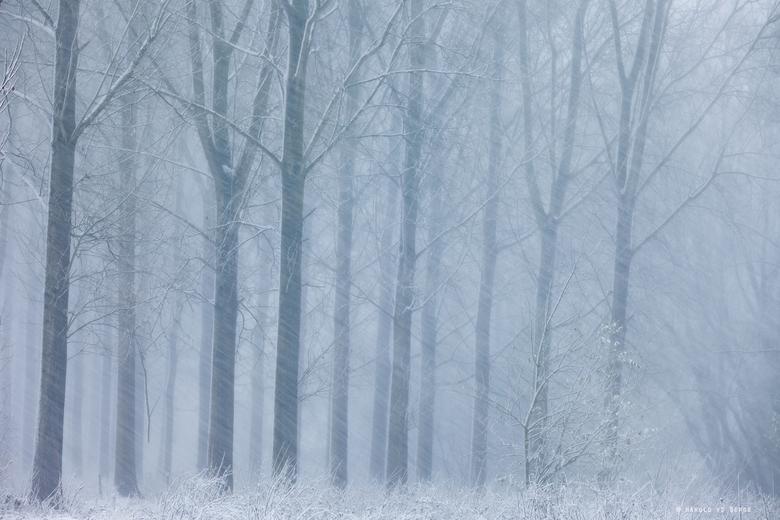White Blizzard - Tijdens de sneeuwval ook flinke wind wat een fraai beeld gaf.<br /> <br />