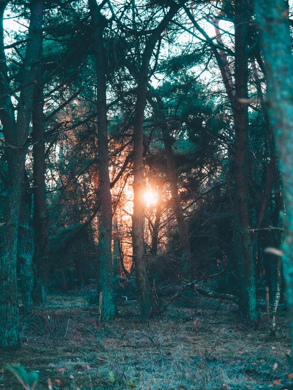 """Fire in the Woods - een boswandeling in deze tijd van het jaar geeft mooi lichtspel, en dichtgeknepen oogjes <img  src=""""/images/smileys/wilt.png""""/>"""
