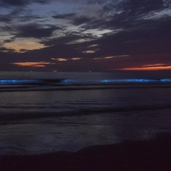 Zeevonk Zandvoort
