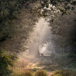 vroeg in het bos