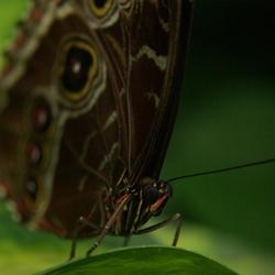 Vlinder (Macro)