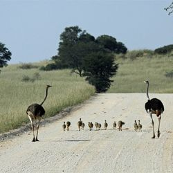 Familie Struis in Kgalagadi