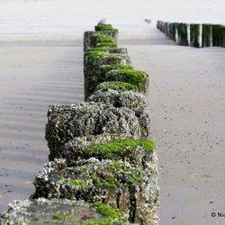 Paaltjes op het strand bij Haamstede