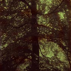 Nature-art 51 highlights