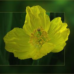 zomaar...een bloempje 2