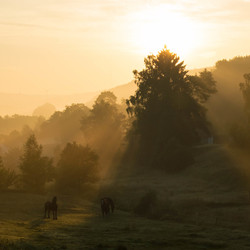 morning shines