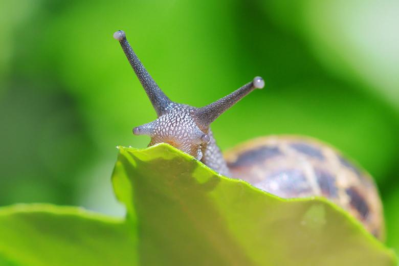 Slak - Gisteren kwam ik deze slak tegen in de tuin. Sommige zien ze niet graag in de tuin, maar ik vind het schitterende beestjes!
