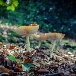 Herfst1.jpg
