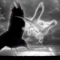 birdfight1.2.jpg