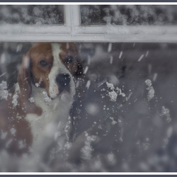 kijken naar de vallende sneeuw