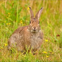 konijn in het zonnetje