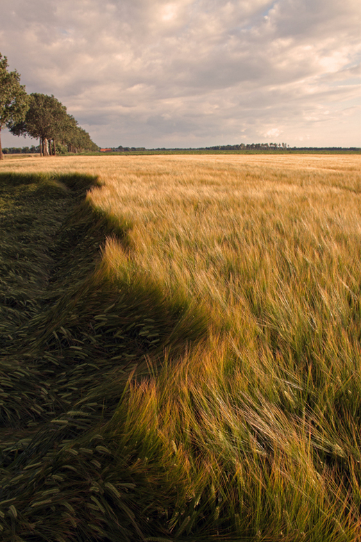 Landleven I - Oost Groningen