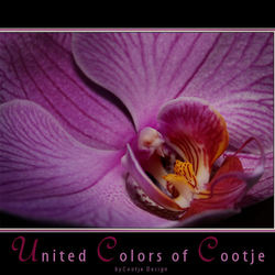 United Colors of Cootje