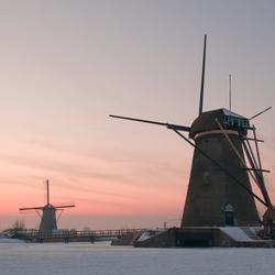 Krakend Kinderdijk anno 2012  (2)