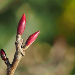 Het voorjaar komt er aan......