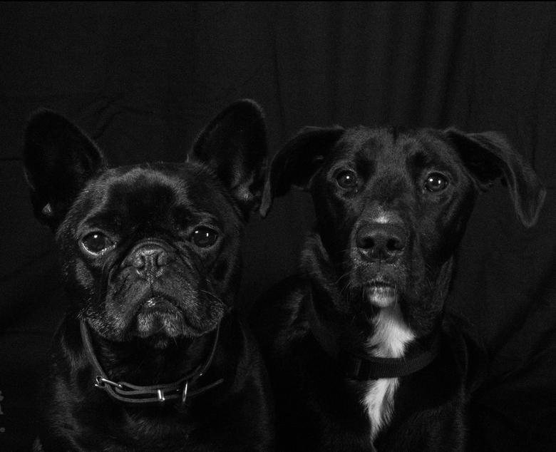 """Wij zijn 2 vriendjes... - Mijn eerste foto in de """"thuisstudio"""". Onze knappe honden. Foto is gemaakt met een Canon 7D. #Meemfotografie *leerp"""