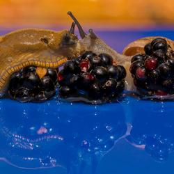 Snail love