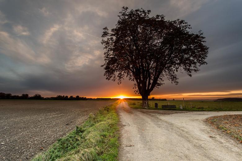 Einde van de dag - De laatste herfstbladeren worden verlicht door een dreigende zonsondergang.