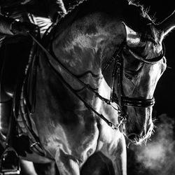 Horse in the dark
