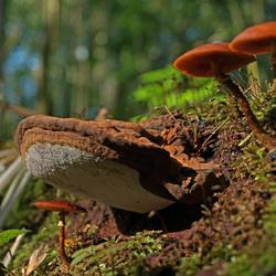 slimme paddenstoel