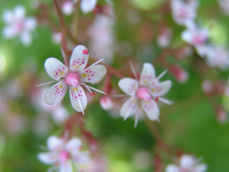 Bloem - Gewoon een mooie bloem, close-up, met vage achtergrond