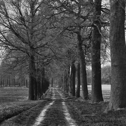 Landweg met bomen.