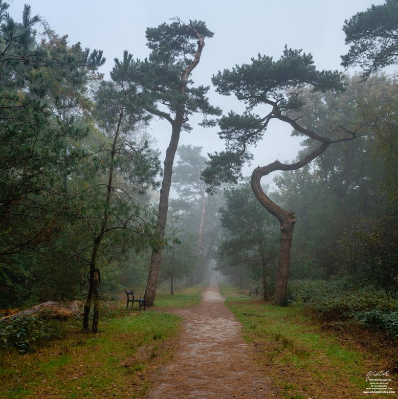Misty Bergerbos -