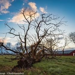 Mijn boom