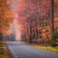 Autumn Road!