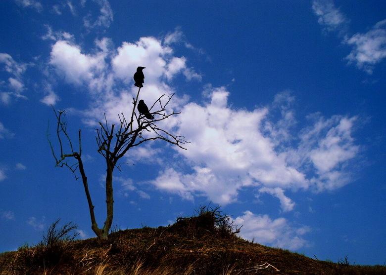 The Birds -03 - Hoe belangrijk is de lucht in een foto? Heel belangrijk. Met een andere lucht verandert de hele sfeer. Hier weer een compleet ander be