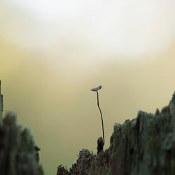 Een taai paddenstoeltje