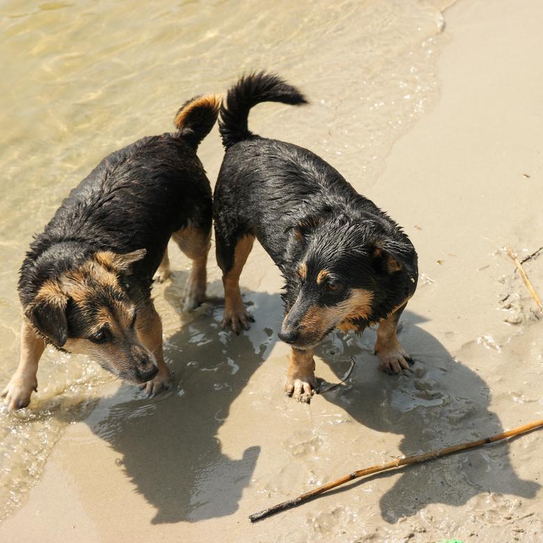 Ik wou dat ik twee hondjes was