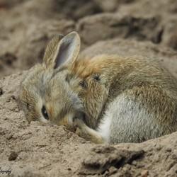 Even een dutje doen in het warme zand