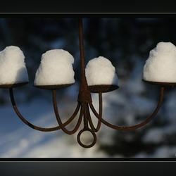 sneeuwkandelaar..