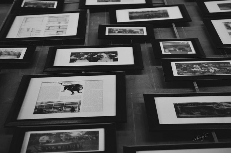 Collage Artis - Artis Zoo