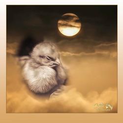 morgen is het pas Pasen..............