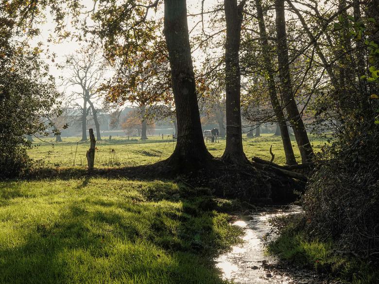 Herfstsfeer - Tijdens de wandeling vlakbij Uelsen zag ik dit kleine beekje. Tussen de bomen door zie je nog twee koeien. Uelsen is een klein plaatsje