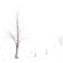 WinterindeHogeVenen