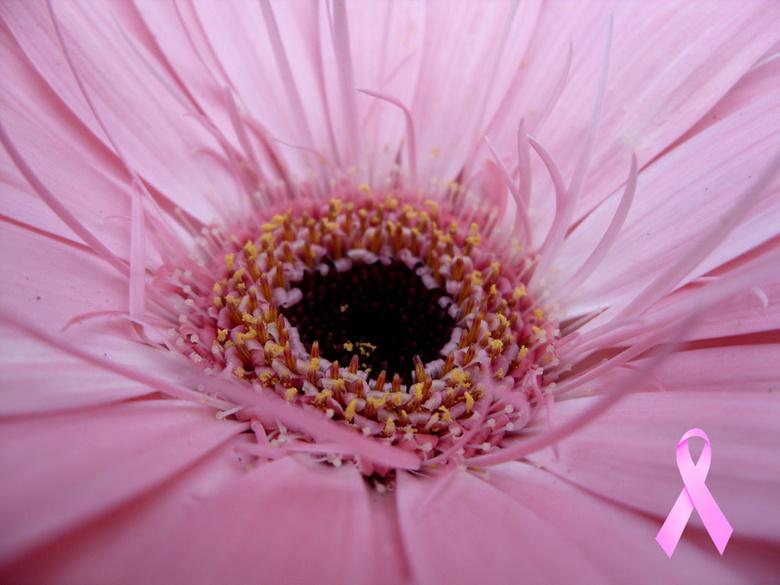 Pink Ribbon 2011 - Van harte eens met een goede zaak: Pink Ribbon.