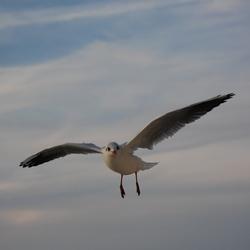 Als een vogel zo vrij.