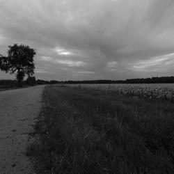 Drenthe zelfs mooi in zwart wit