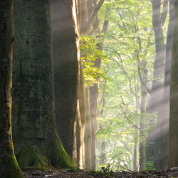 Morning lights through the forest
