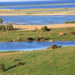 Landschap Funen (Denemarken)