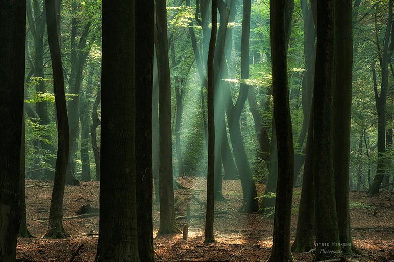 Speulderbos1 - Genieten van het Speulderbos.