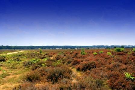 Gooise matras - Deze foto is gemaakt op de Zuiderheide, in de omgeving van Blaricum.