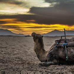 Zonsondergang in de woestijn Marokko (F-V-Z-)