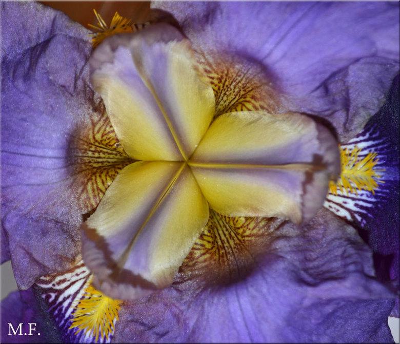 Mooi paars - Dit is voor mij nog n onbekende bloem