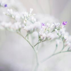 Kleine bloempjes....
